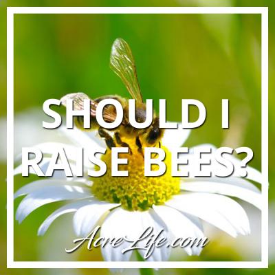 Should I be a beekeeper?