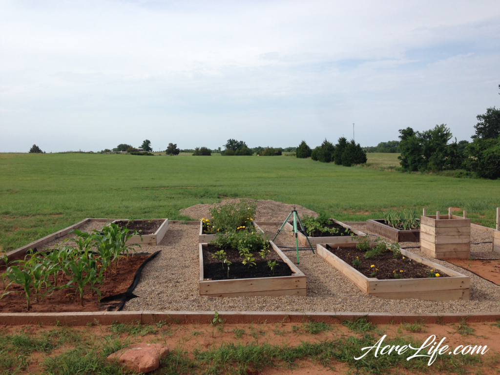 Our raised bed and in ground combination garden - Acre Life