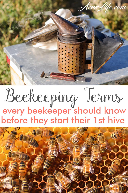 Beekeeping Terminology Common Terms Every Beekeeper