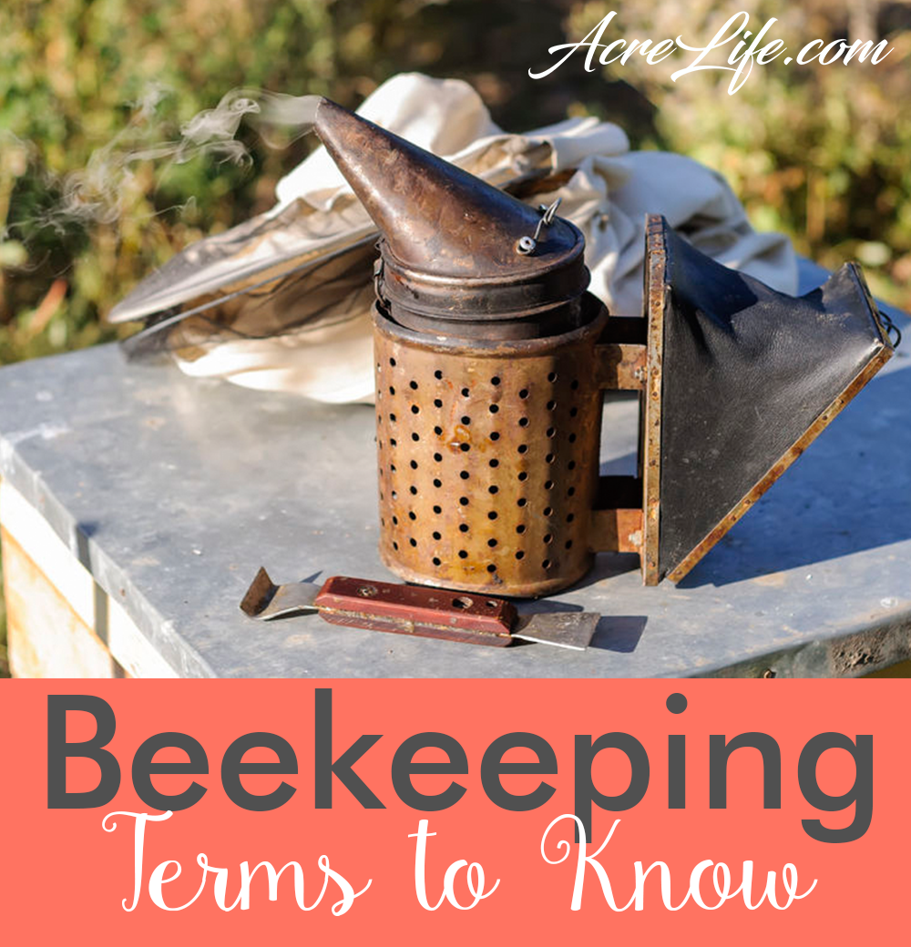Beekeeping Terminology - Terms Every Beekeeper Should Know - AcreLife