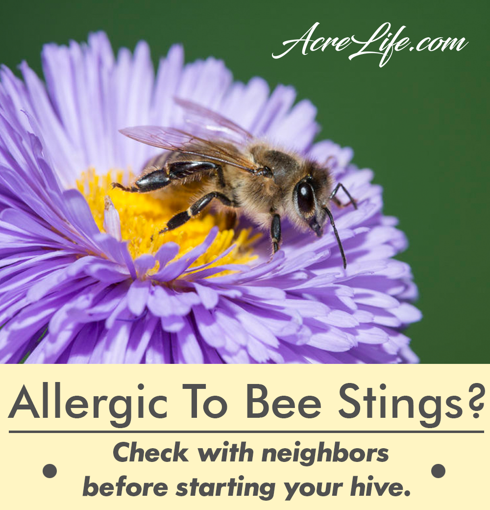 Are My Neighbors Allergic To Bee Stings? - Acre Life