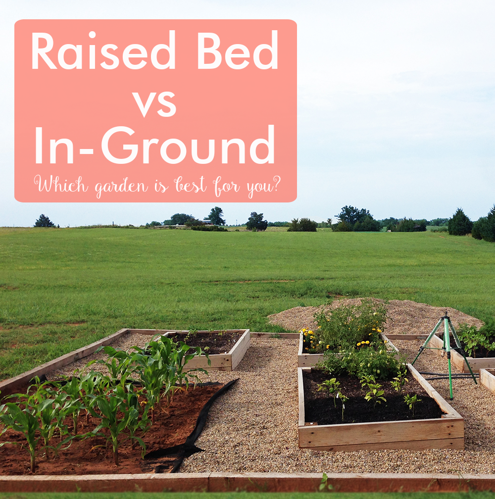 Raised Bed vs In Ground Garden - AcreLife