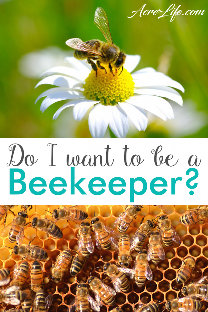 Are you ready to become a beekeeper - AcreLife
