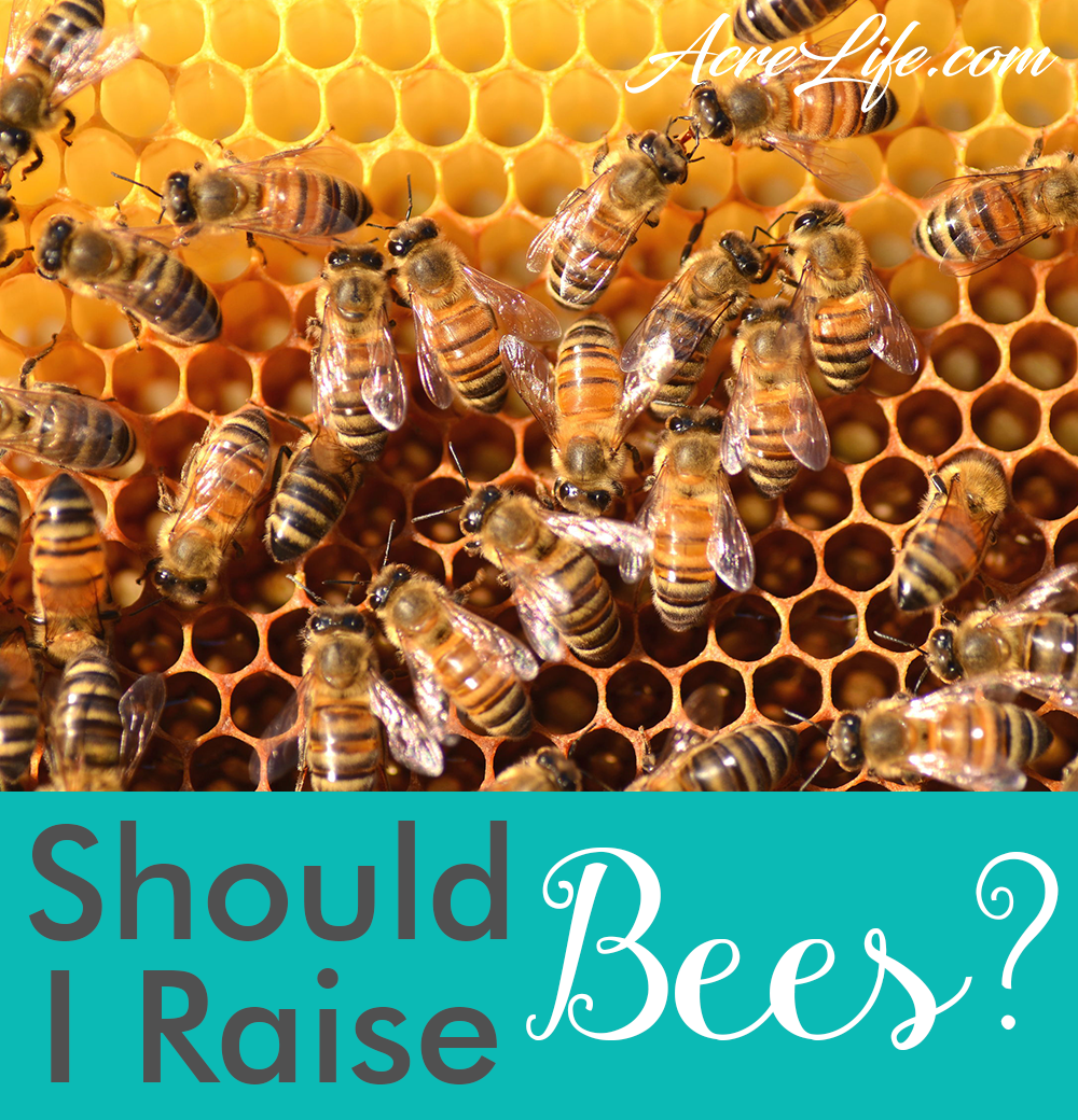 Are you ready to become a beekeeper -AcreLife