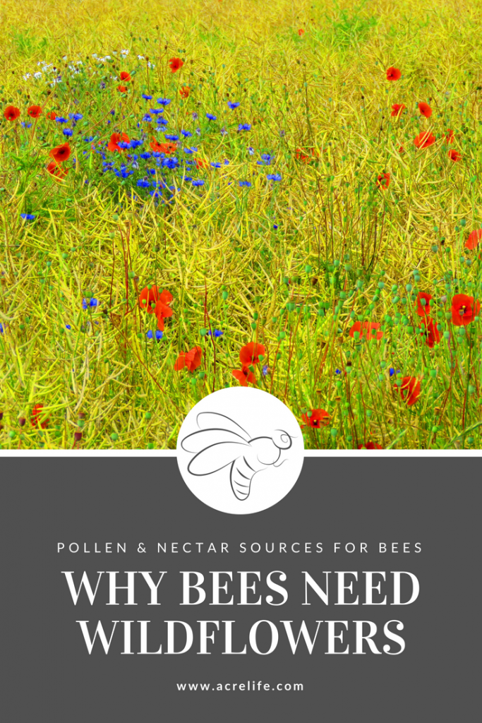Why Bees Need Wildflowers - Acre Life