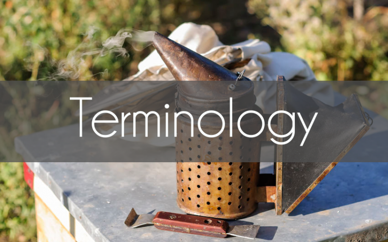 Beekeeping Terminology Common Terms Every Beekeeper Should Know - AcreLife