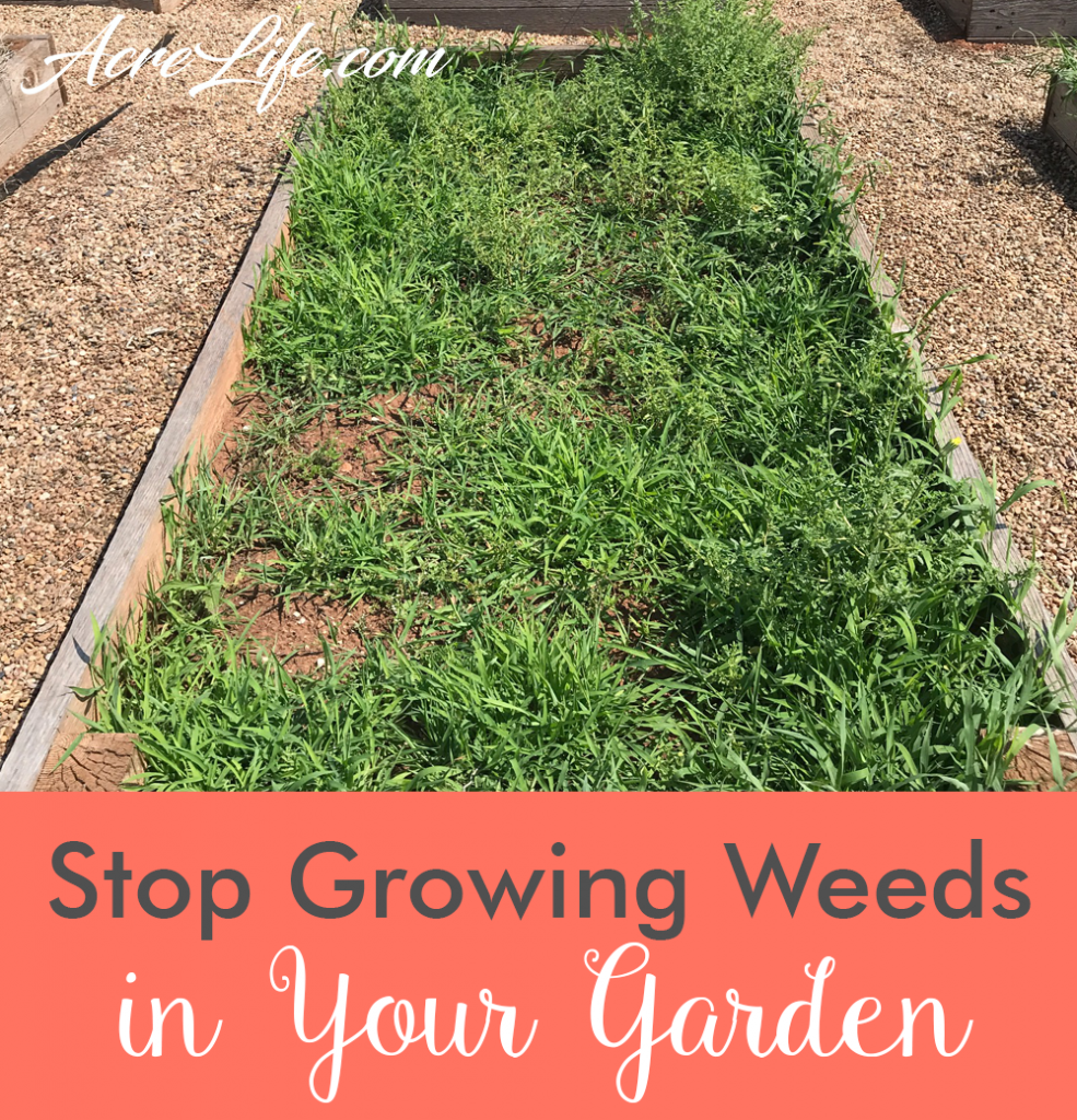 How to Stop Growing Weeds in Your Garden - Acre Life