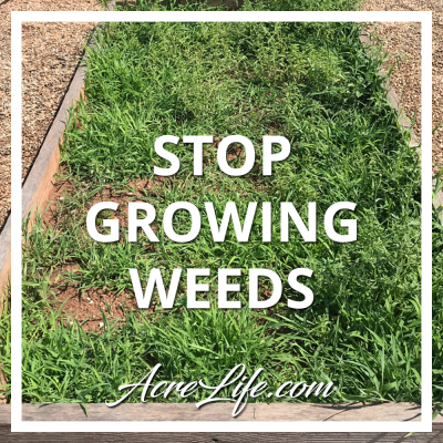 Growing Weeds