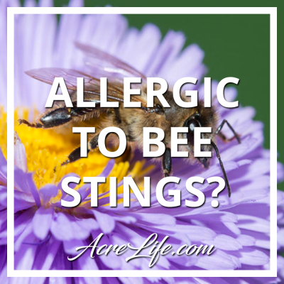 How to know if you are allergic to bee stings