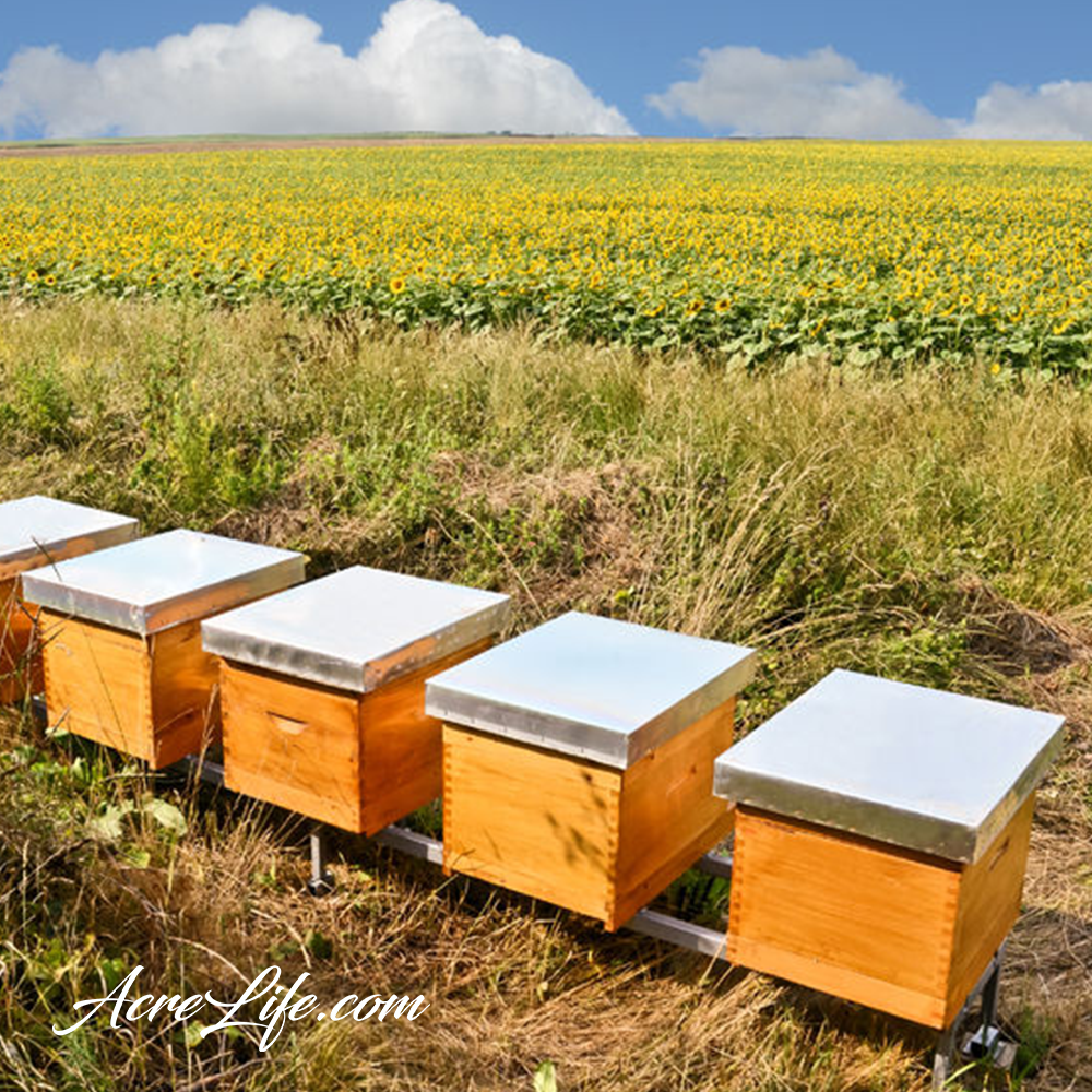 Bee Hive Location - Acre Life