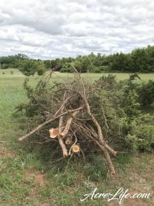 Pile of Cedar Branches - Acre Life