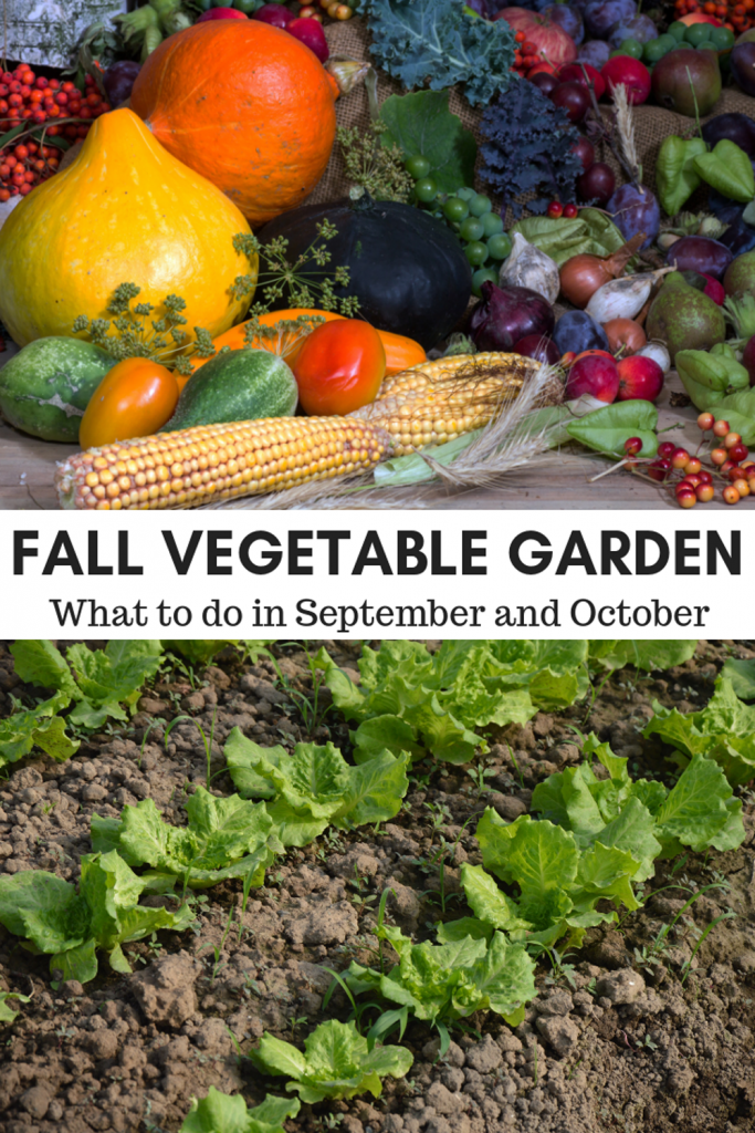 Fall Vegetable Garden - Acre Life - What to do in your garden in September and October