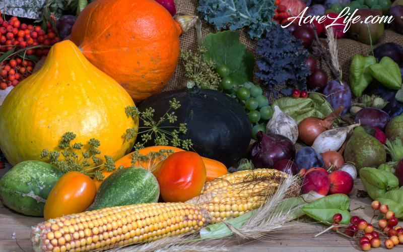 Fall Vegetable Garden in September and October