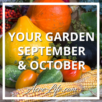 Your Vegetable Garden In September and October