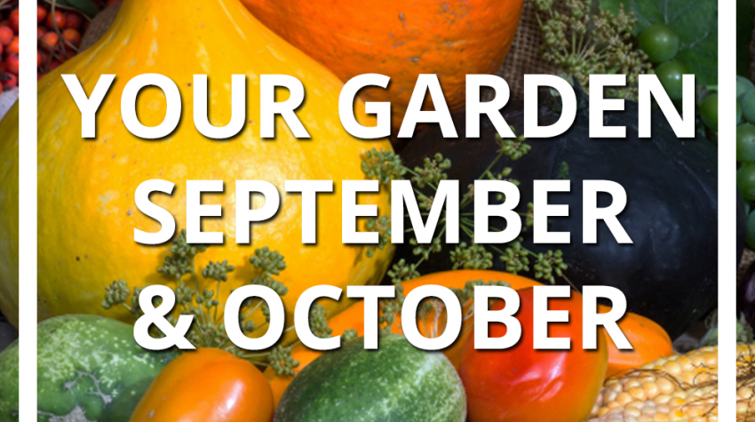 Planting a Fall Garden in September and October