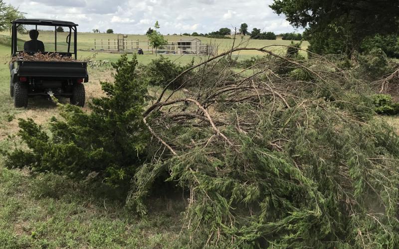 Hauling Cedar Branches - Acre Life