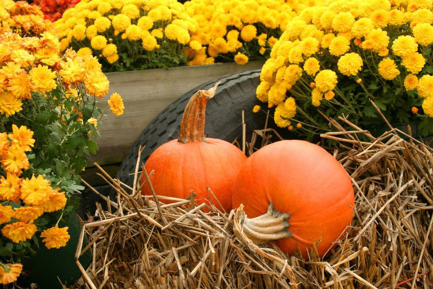 Fall Decorations with mums and pumkins sitting on hay.