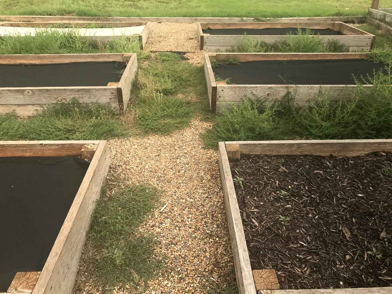 The raised beds are weed free but the walkway is covered in weeds.