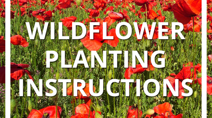 Wildflower Planting Instructions