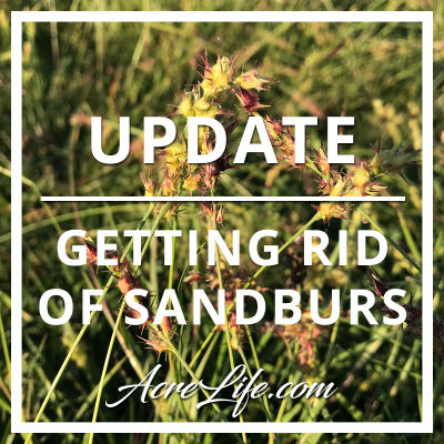 Update To My Sandbur Battle