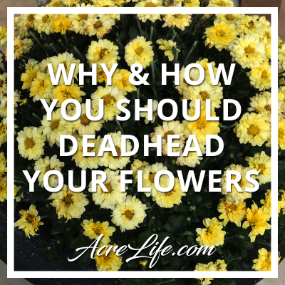 Why and How You Should Deadhead Your Flowers