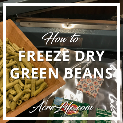 How to freeze dry green beans at home
