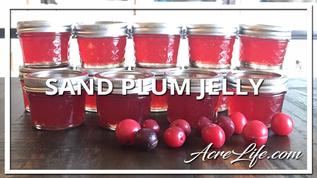 Canning Sand Plum Jelly - Acre Life