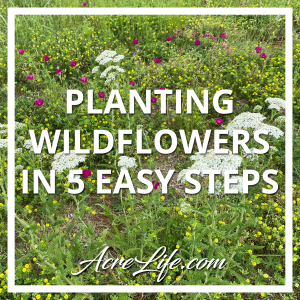 Planting Wildflowers in 5 Easy Steps - Acre Life