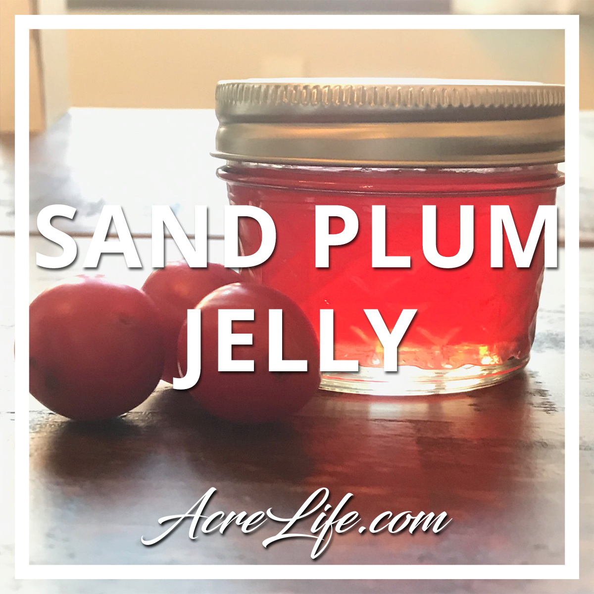 Sand Plum Jelly - Acre Life