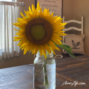 Cut Sunflower - Acre Life
