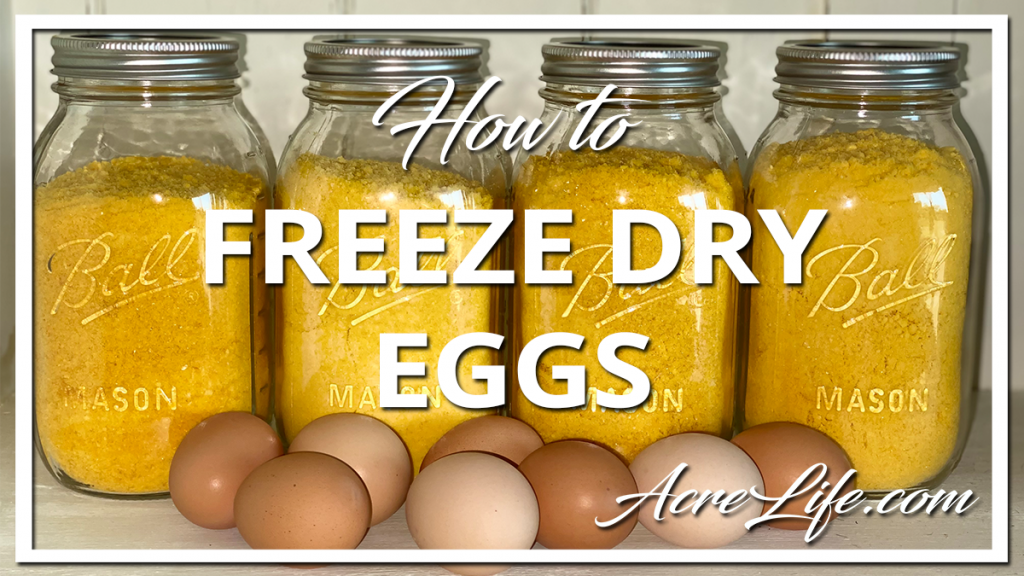 How To Freeze Dry Eggs