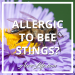 Are My Neighbors Allergic To Bees?